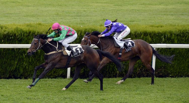 Flat horse racing betting tips